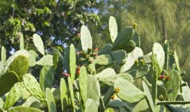 cactus-verde--fondos_19-110592