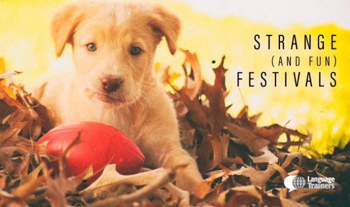 fun-festivals
